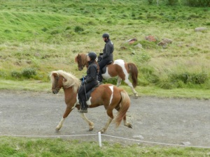 Icelandic horse demonstration at the Gauksmyri Horse Farm